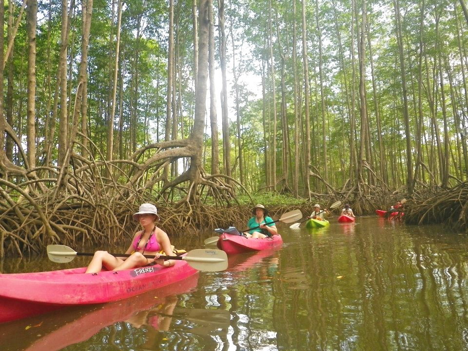 Mangroves Kayak Tour Student Group