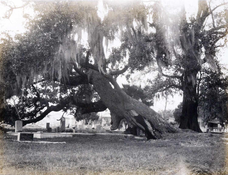 Tree Graves