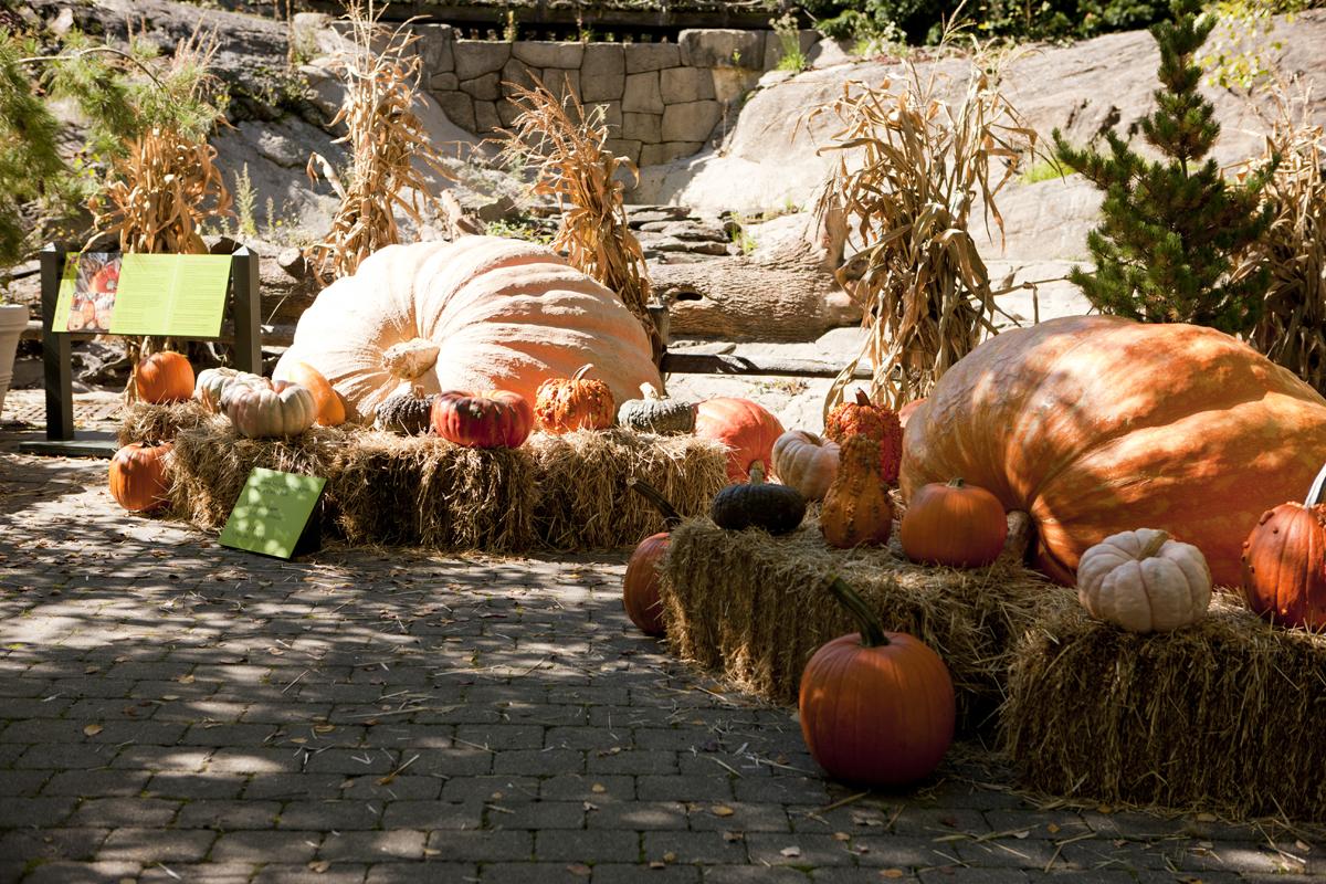 NY Botanical Garden Giant Pumpkin Weekend.png