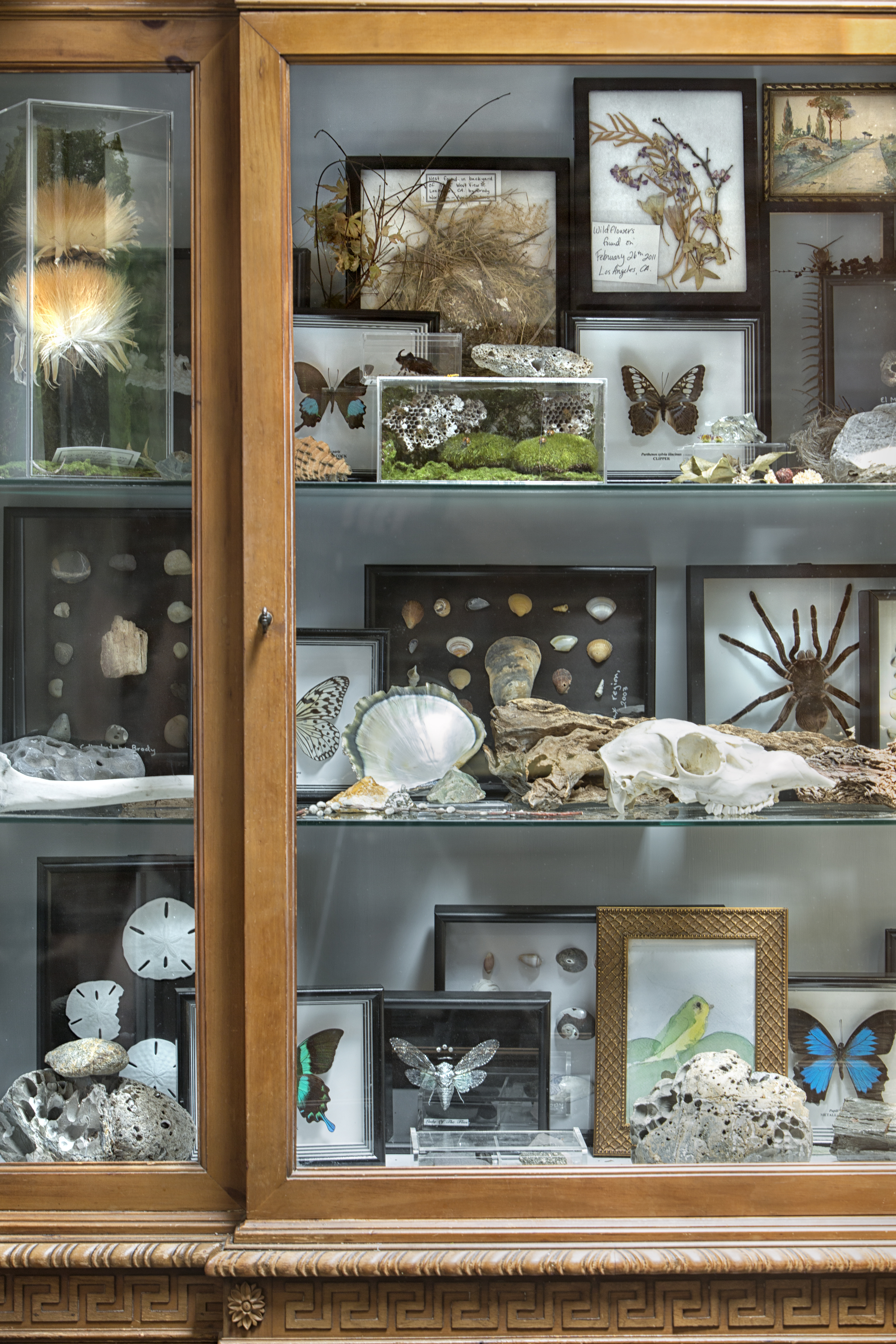A collection, like this one of various natural curiosities, is not only fascinating and colorful, but also a cool learning tool for Michelle's children.