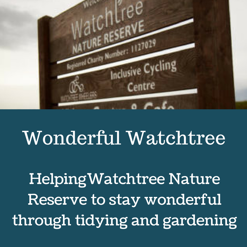 Wonderful Watchtree.png