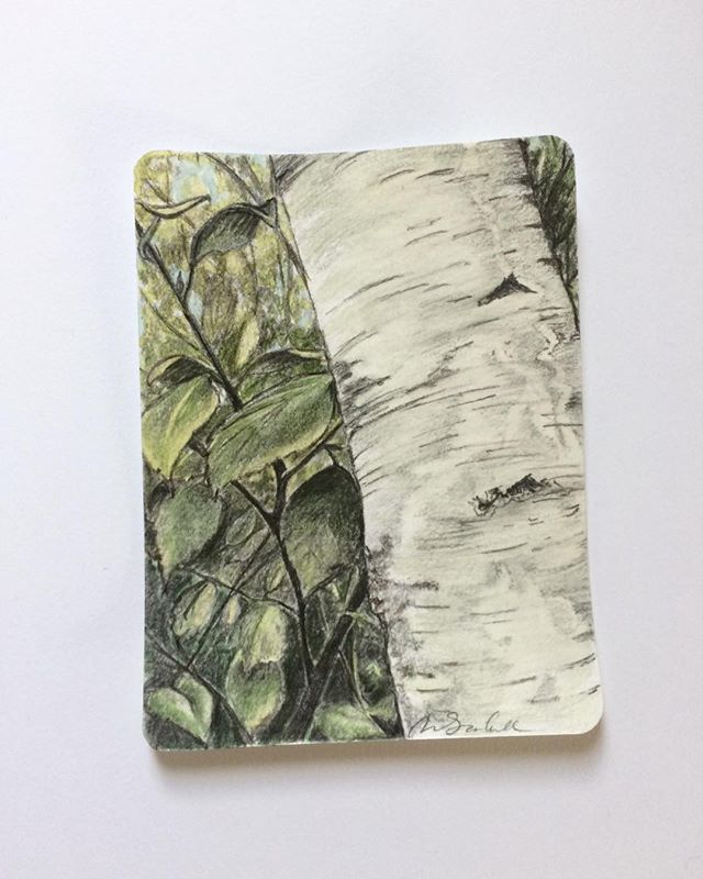 Such a long time since I've posted anything! This small sketch is from a birch grove on the little Swedish island I have been visiting. #Ilovesweden #birchtrees #sketching #graphite #watercolor #skärgård