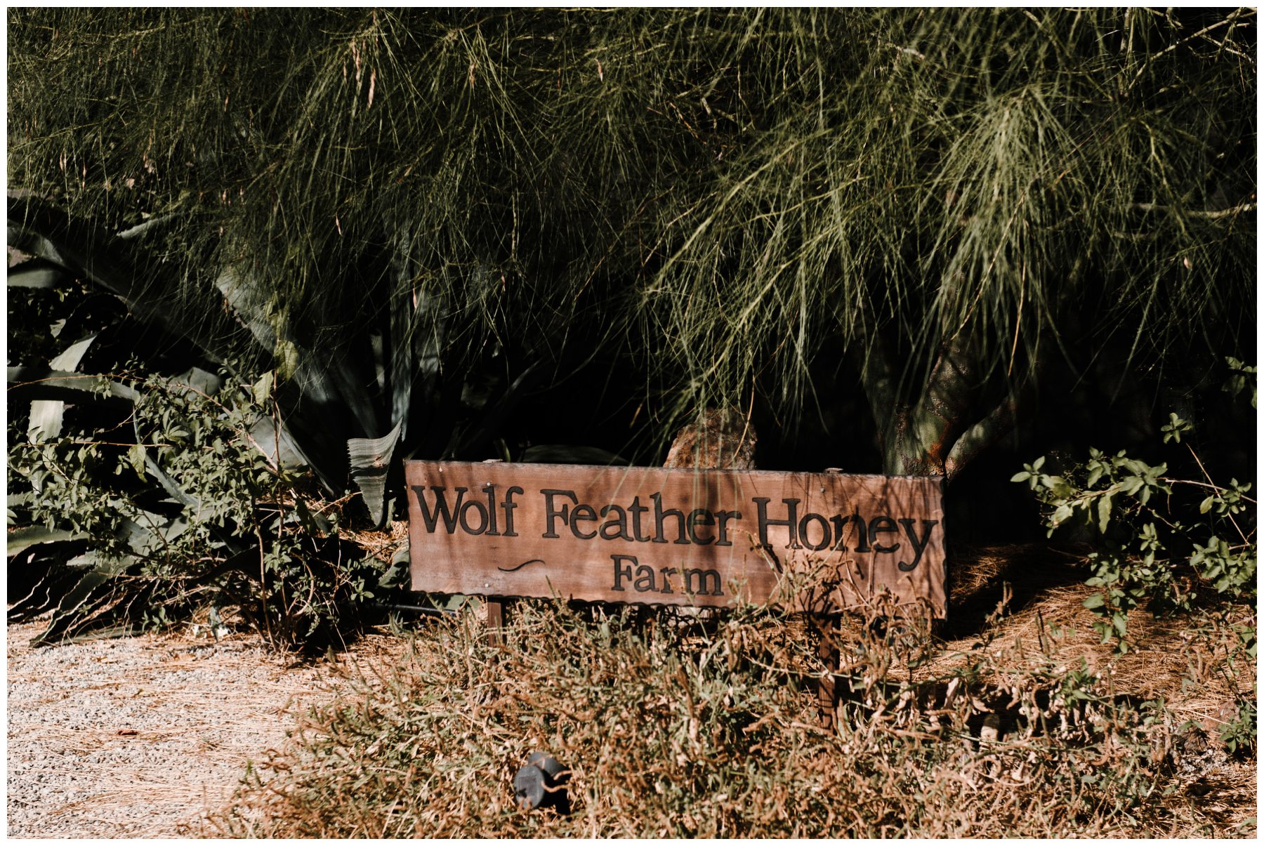 Temecula_Wedding_photographers_Wolf_Feather_Honey_0033.jpg