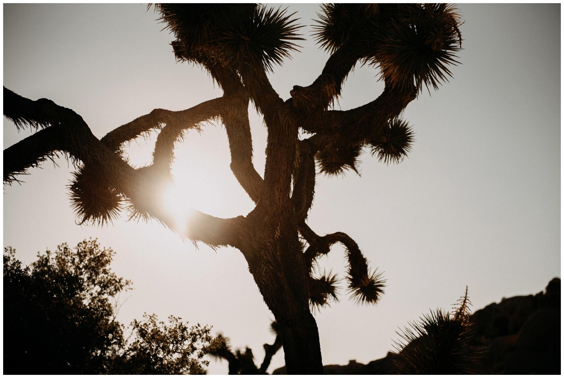 Joshua_Tree_Engagement_The_Singlers__0010.jpg