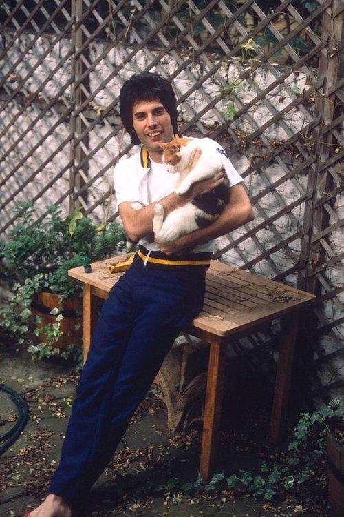 freddie-mercury-with-cats-6.jpg
