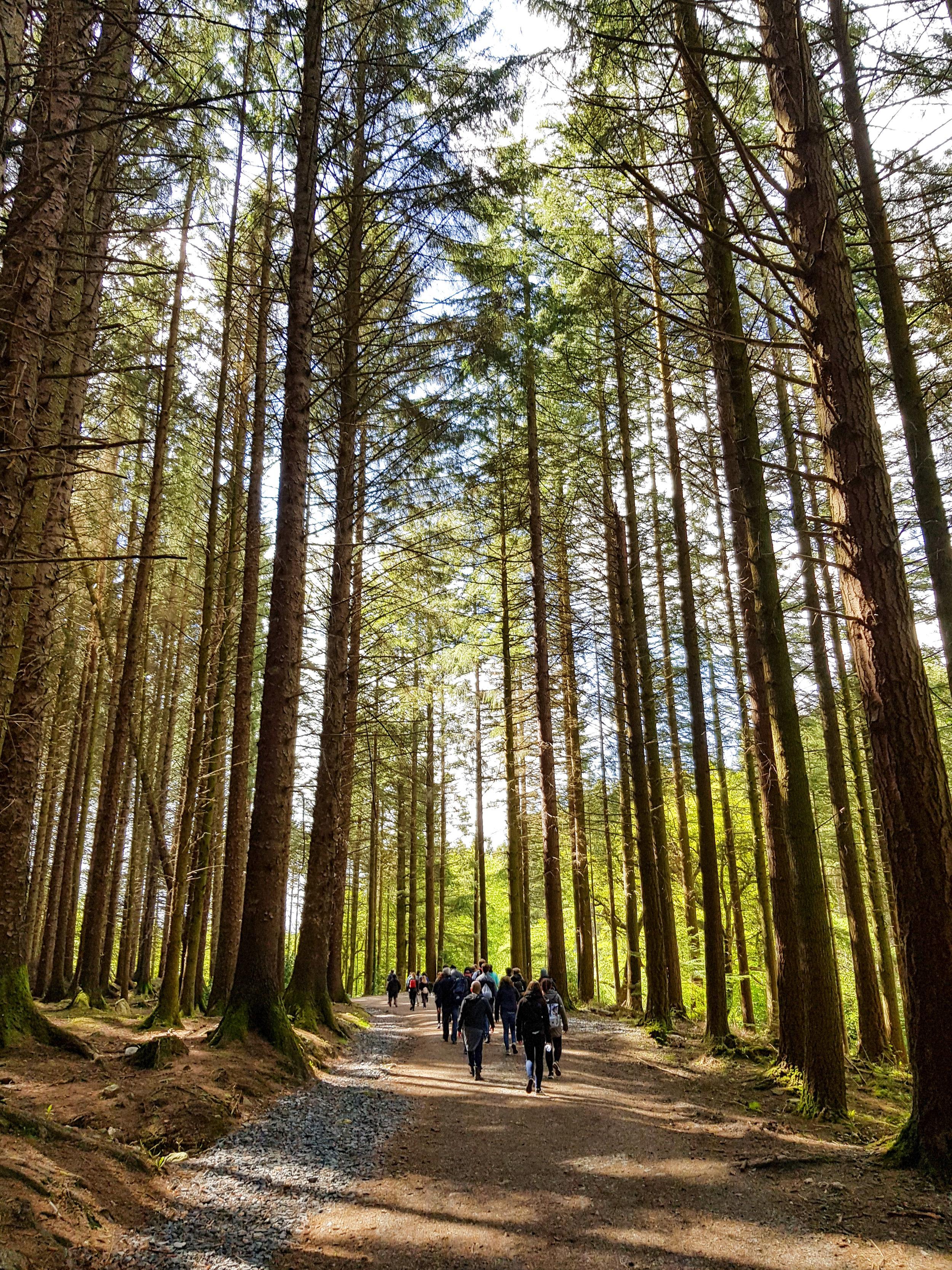 Tollymore Forest, Irlanda del Nord. Foto di Greta Cinalli