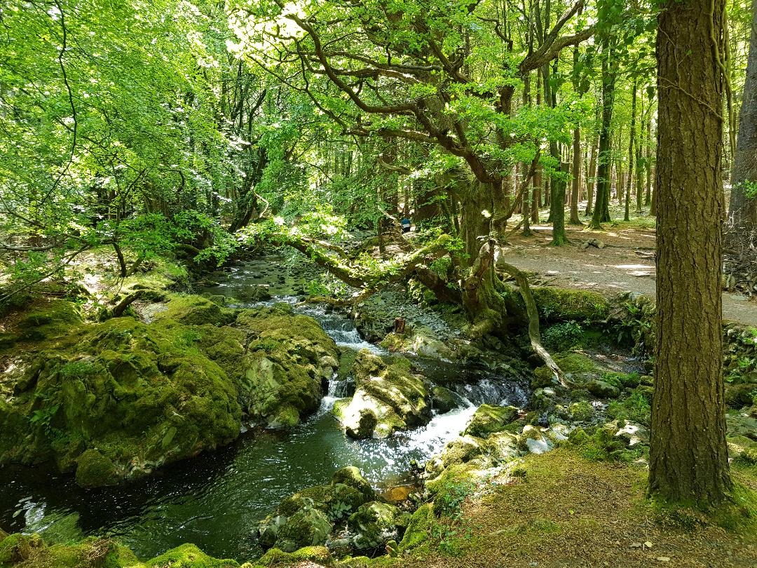Tollymore Forest, Irlanda del Nord. Foto Greta Cinalli