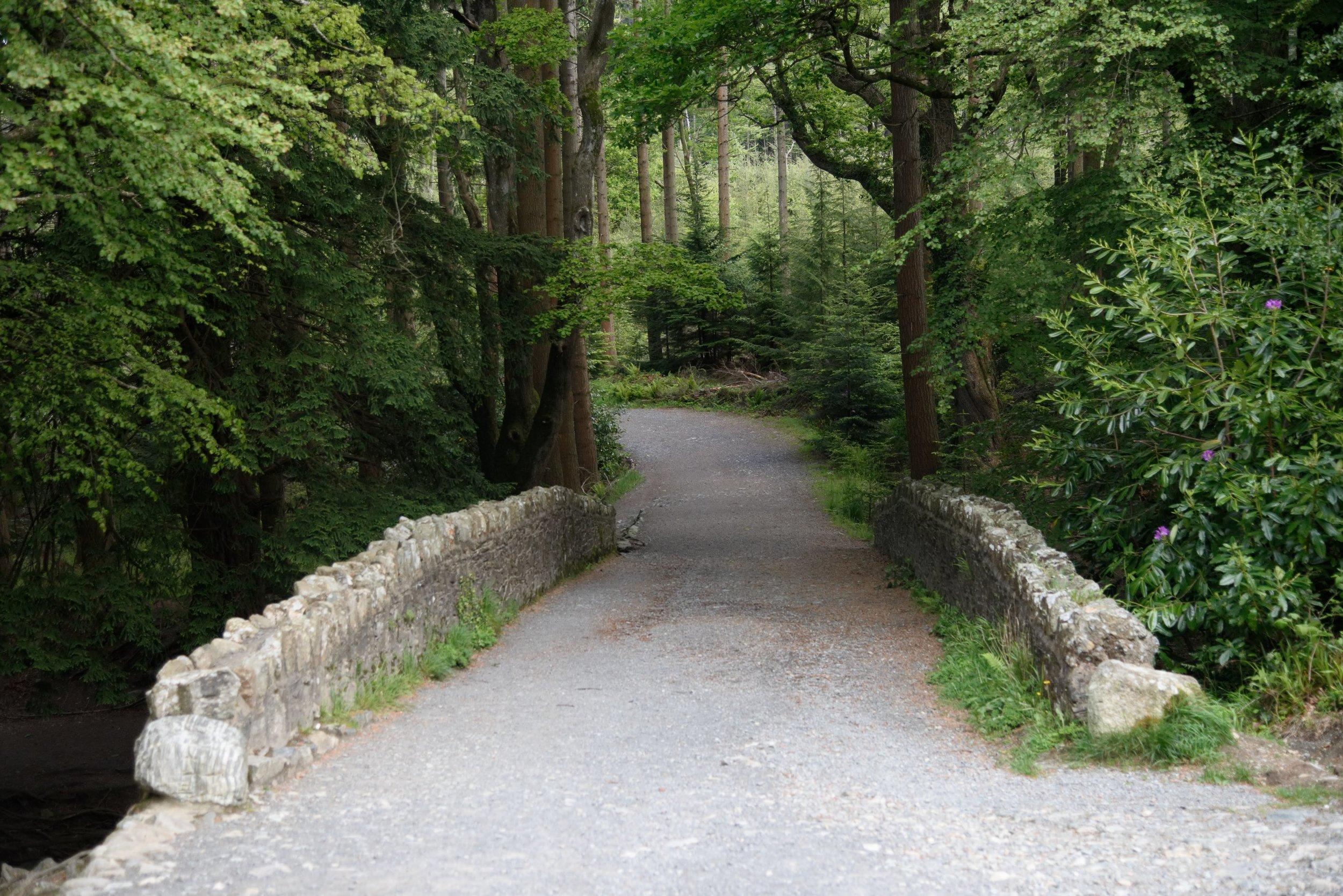 Tollymore Forest, Irlanda del Nord. Foto di Valerio Greco