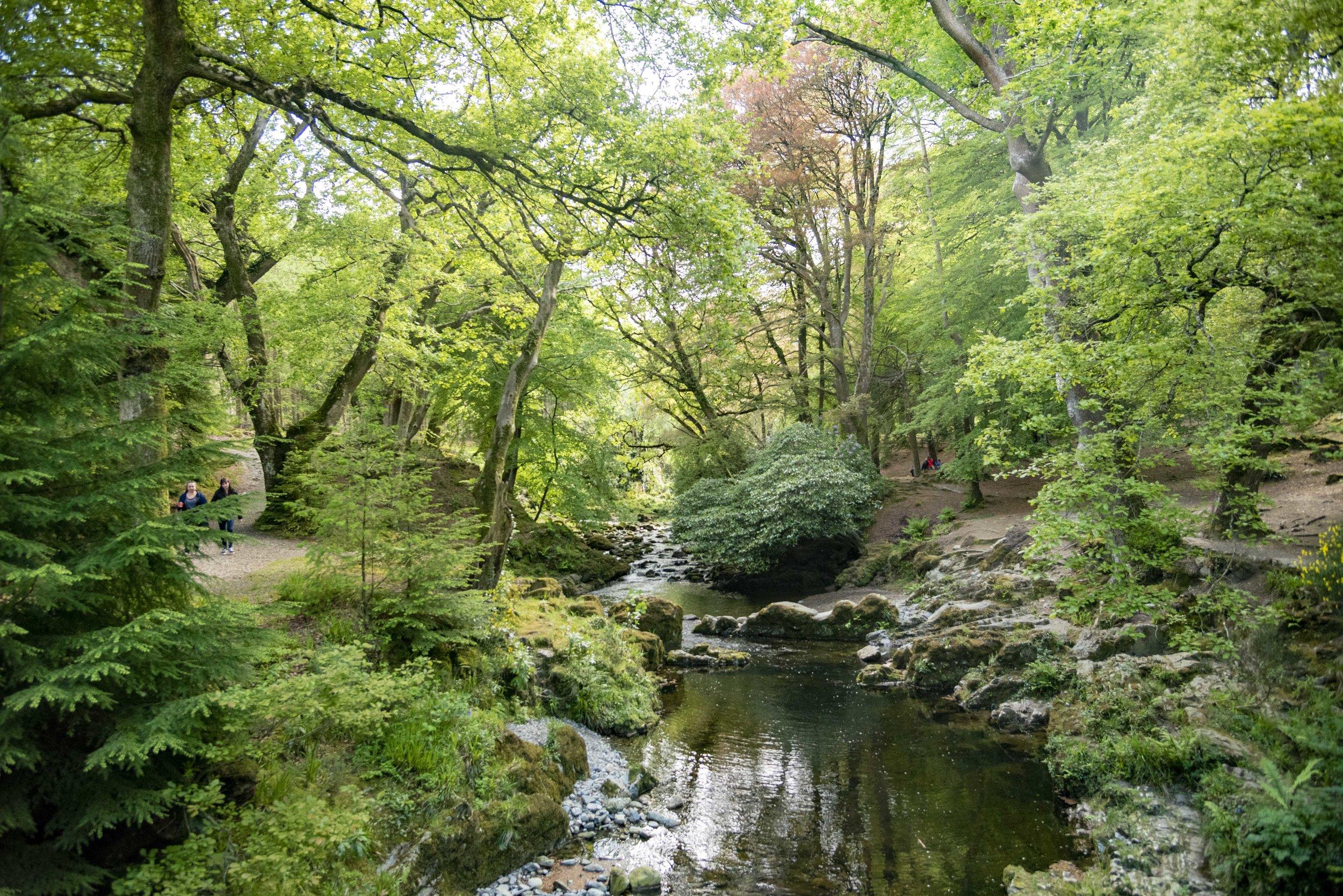 Tollymore Forest, Irlanda del Nord. Foto di: Valerio Greco