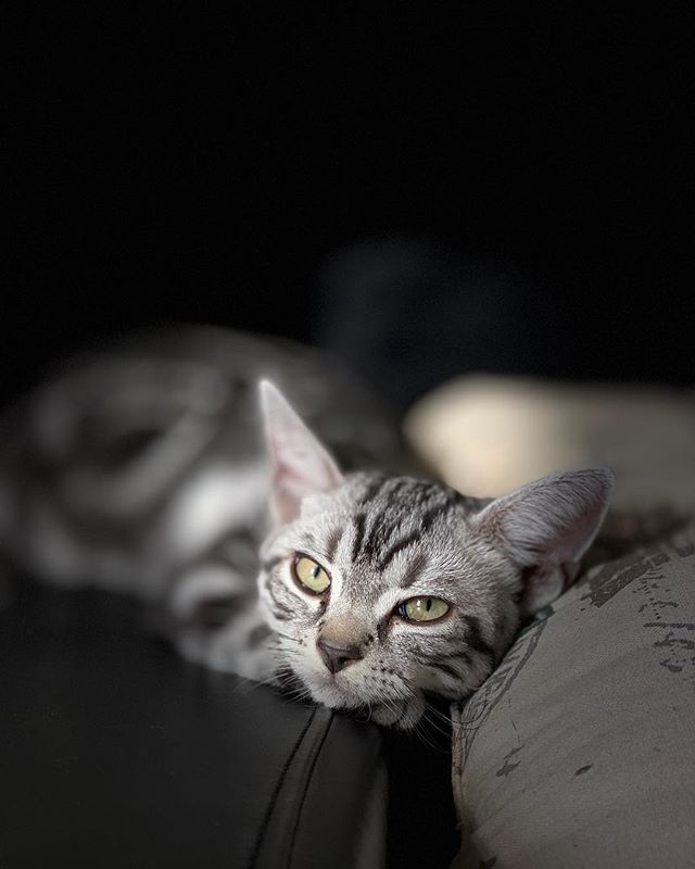 Murzik the Kitty (Shot on the iPhone) ____________________________________ #agameoftones #ig_masterpiece #ig_exquisite #ig_shotz #global_hotshotz #superhubs #main_vision #master_shots #exclusive_shots #hubs_united #jaw_dropping_shotz #worldshotz #theworldshotz #pixel_ig #photographyislifee #photographyislife #photographysouls #photographyeveryday #photographylover #worldbestgram #iglobal_photographers #ig_great_pics #ig_myshot #justgoshoot #xposuremag #collectivelycreate #heatercentral #highsnobiety #shotzdelight