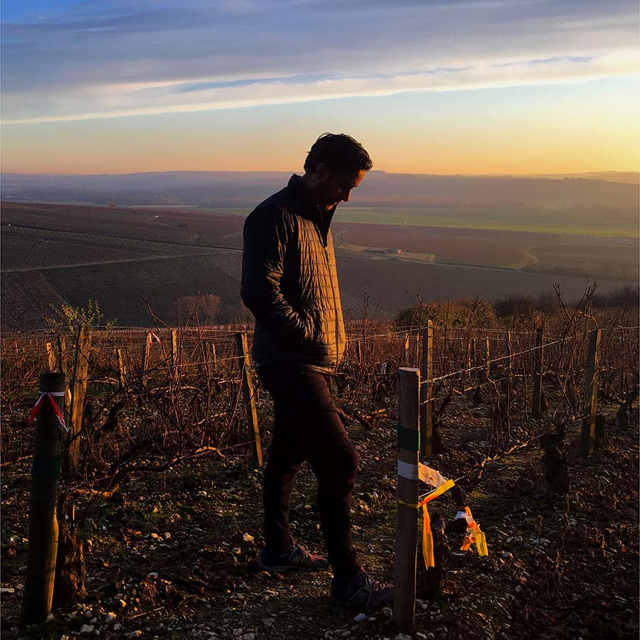 about-viticole.jpg