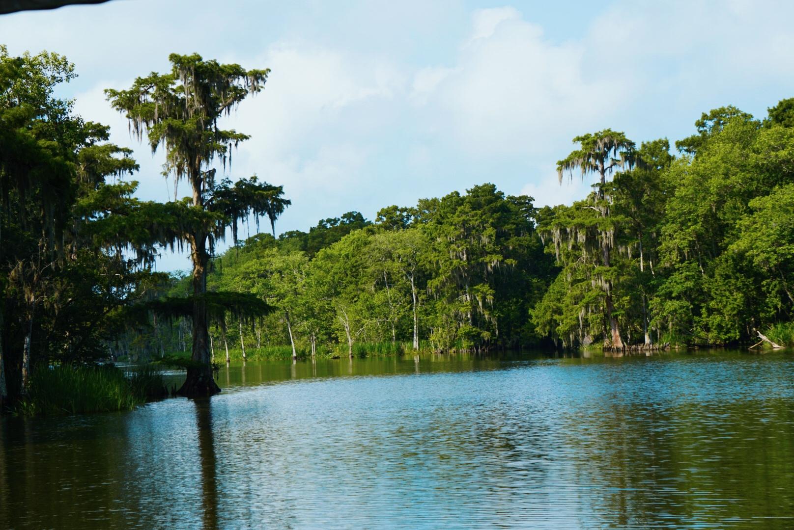 The Bayou