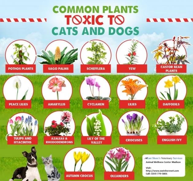 Plants Info.jpg