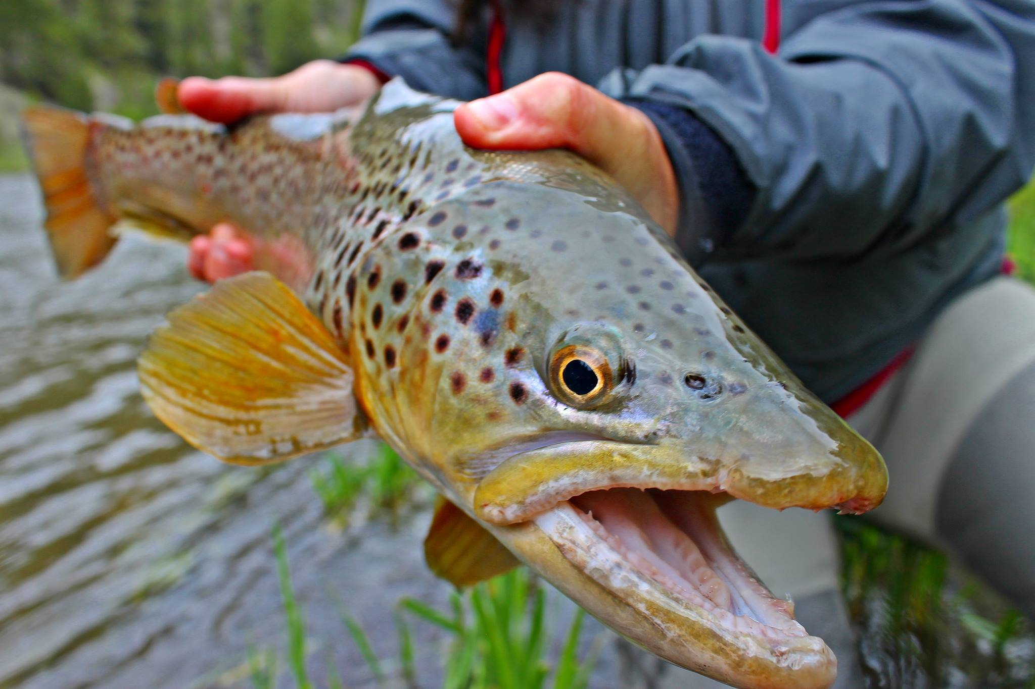 Streamer Fishing Chile | Chile Fly Fishing Guide | Fly Fishing Chile Guide | Patagonia Trout Adventures |