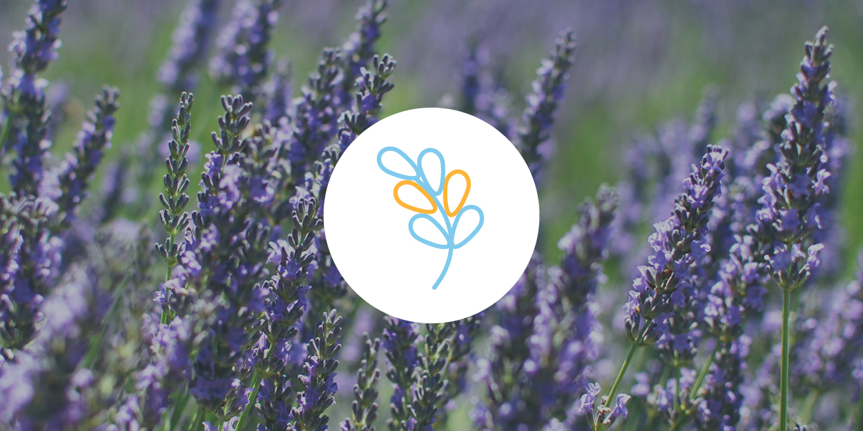 Linalool   SMELL Floral, citrus, candy (also found in lavender, mint, cinnamon)  EFFECTS  Anxiety relief, sedation  ANECDOTAL USE  Anti-anxiety, anti-convulsant, anti-depressant, anti-acne