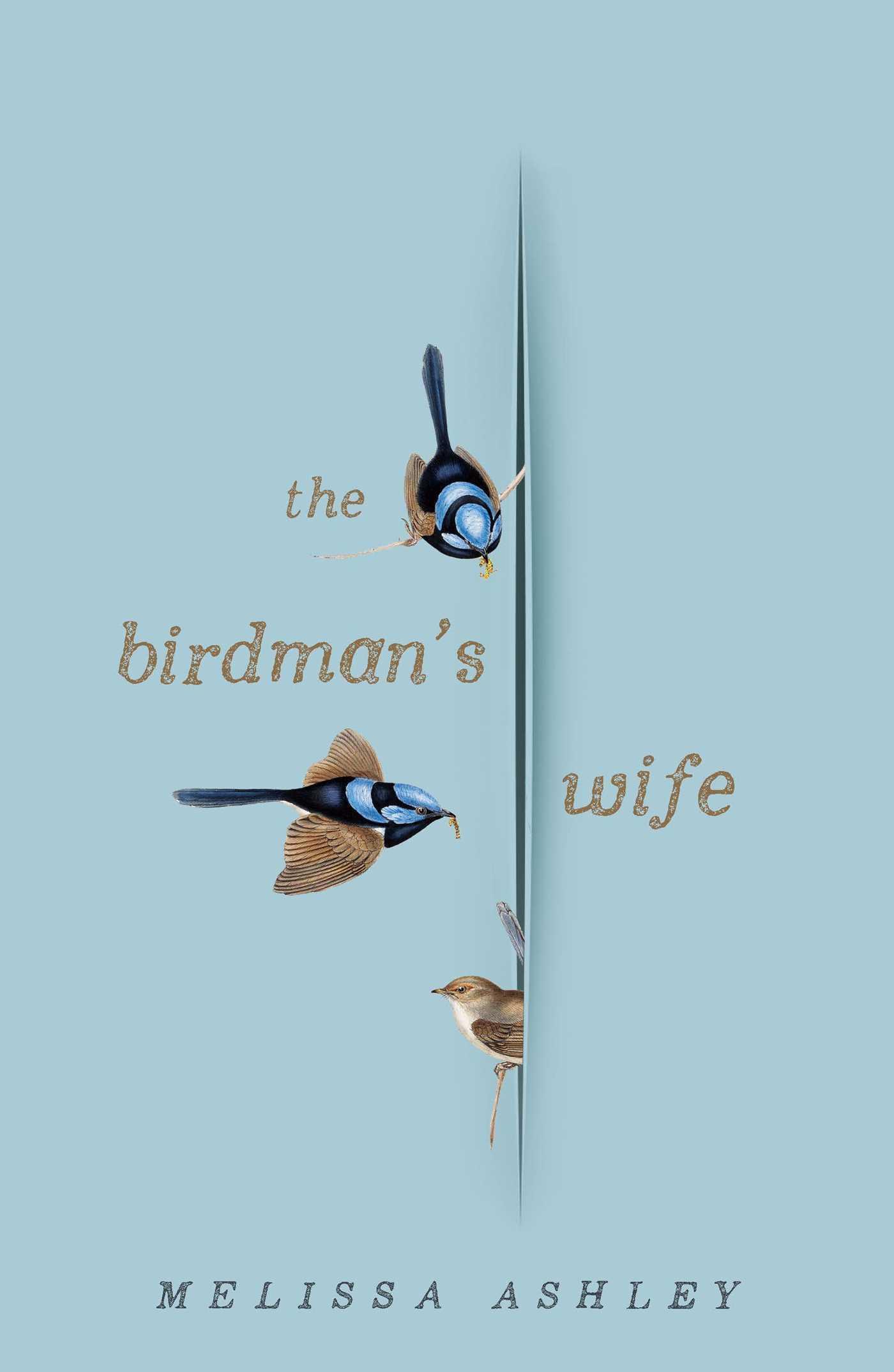 NOVEMBERTHE BIRDMAN'S WIFE - MELISSA ASHLEY
