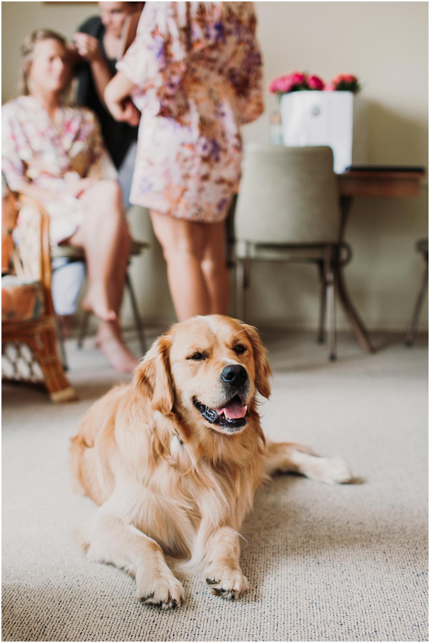 Hannah & Scotts Wedding - Darcy - Carmen Peter Photography