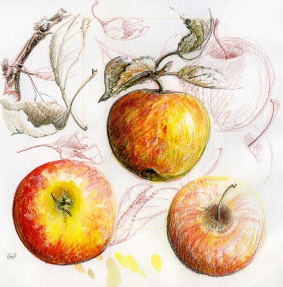 apple-doodle.jpg