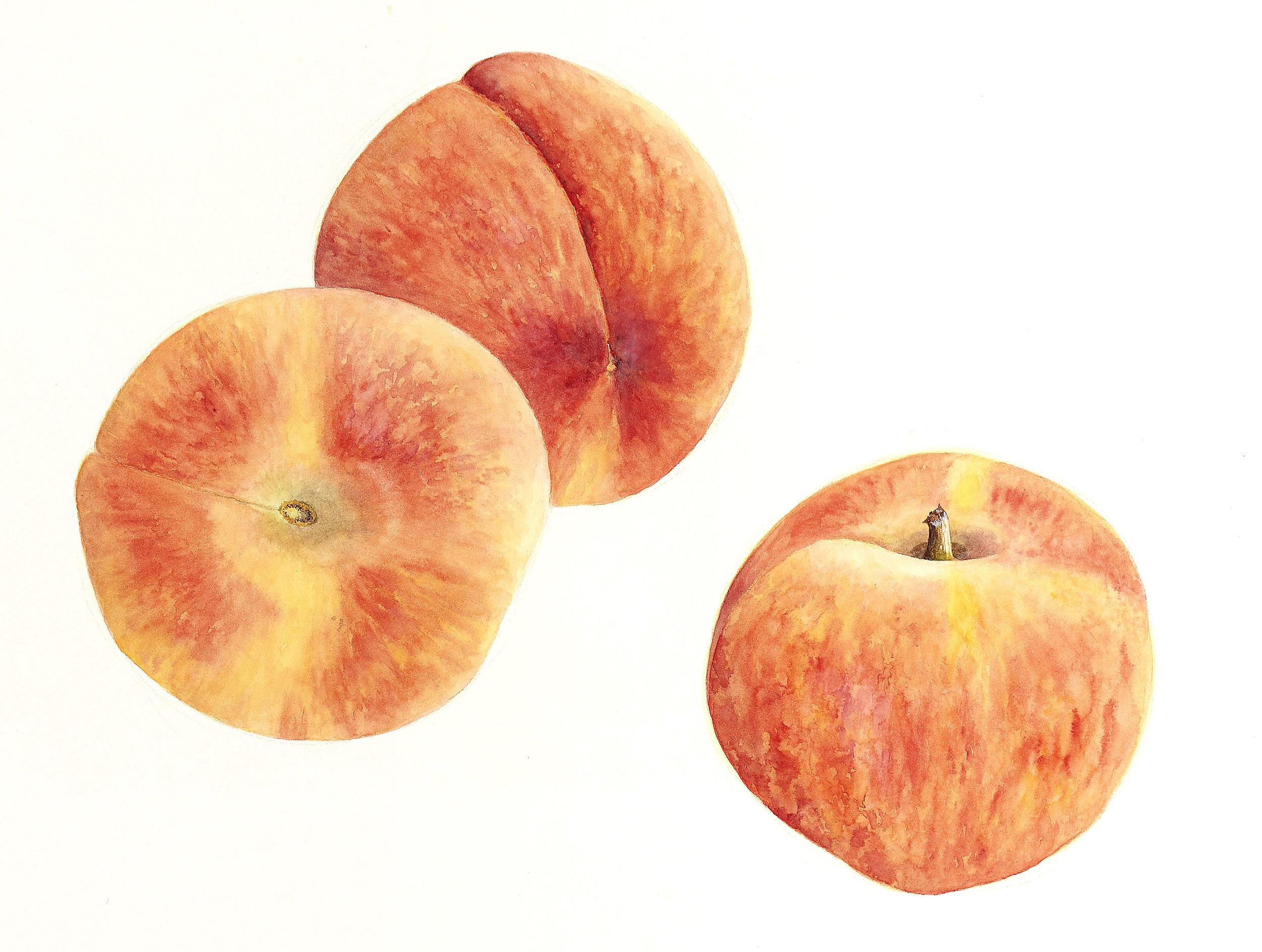 Peaches2019a.jpg