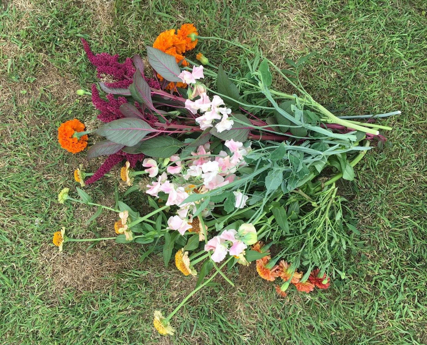 Nice bunch ethical floral design studio flower garden by Sula Somerset Compton Dundon organic cuttings dahlia