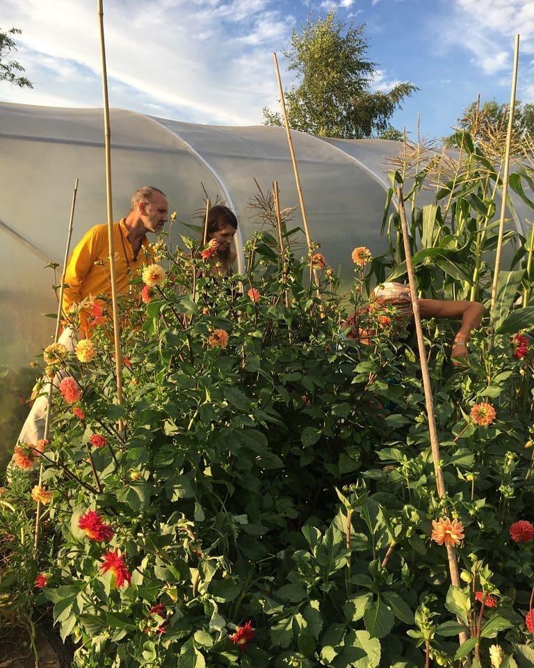 Nice bunch ethical floral design studio flower garden by Sula Somerset Compton Dundon organic