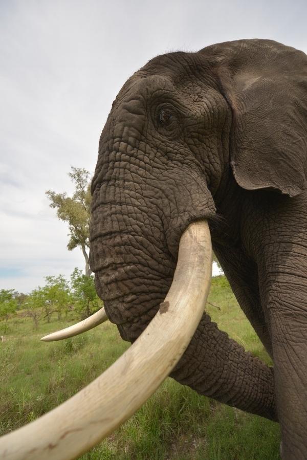 jabu the elephant