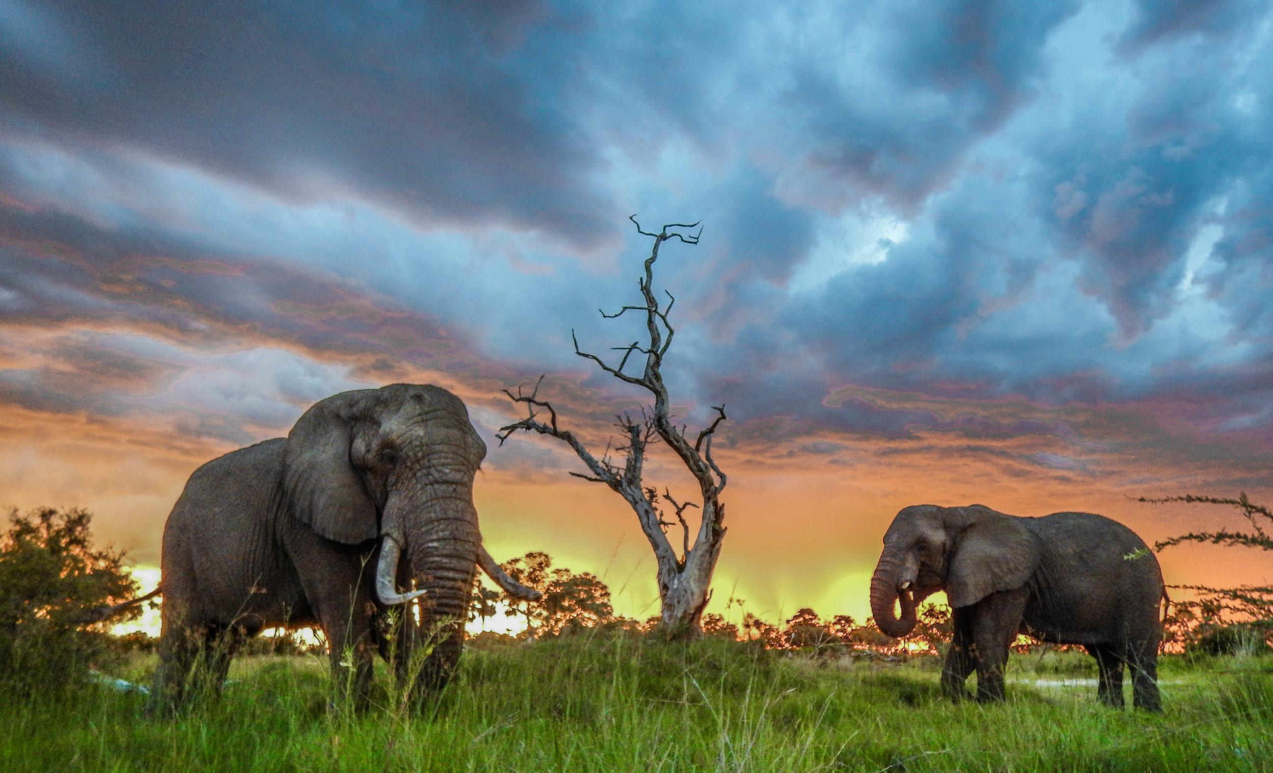 Jabu the Elephant -