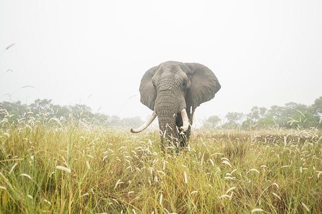 in the mist!  #JabuTheElephant  withelephants.org