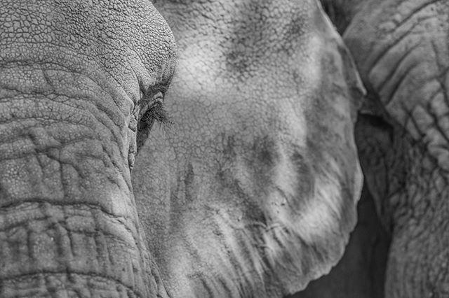 Morula (and Jabu too)! withelephants.org