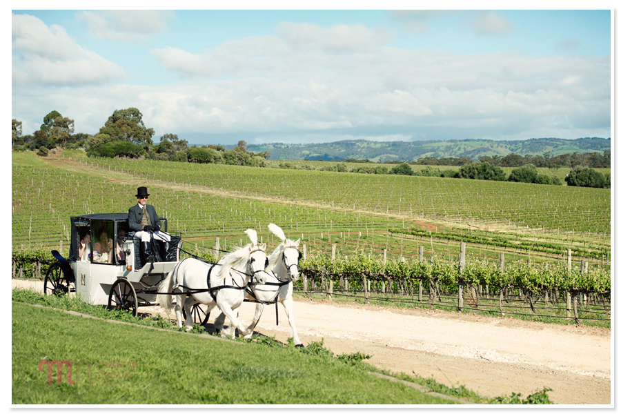 Coriole-Winery-Wedding-1143.jpg
