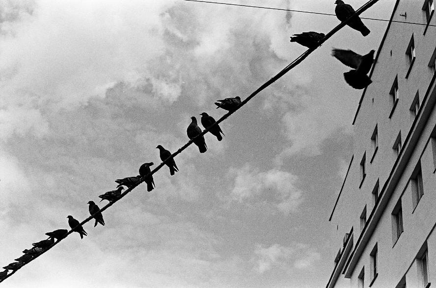 Diagonal of birds