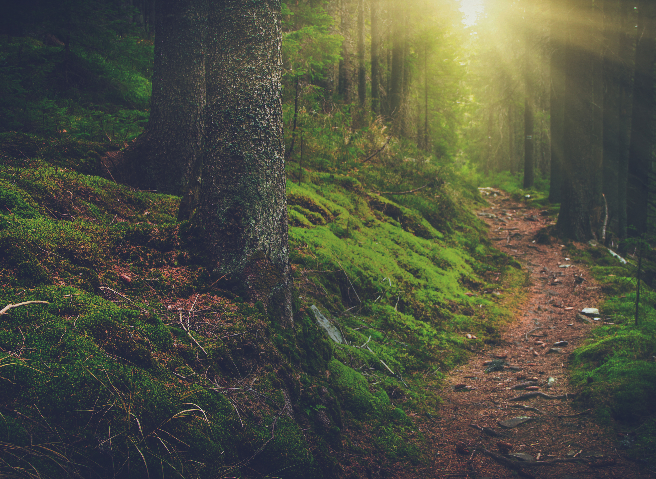 41138294-Landscape-dense-mountain-forest-and-stone-path-between-the-roots-of-trees-in-sunlight--Stock-Photo.jpg