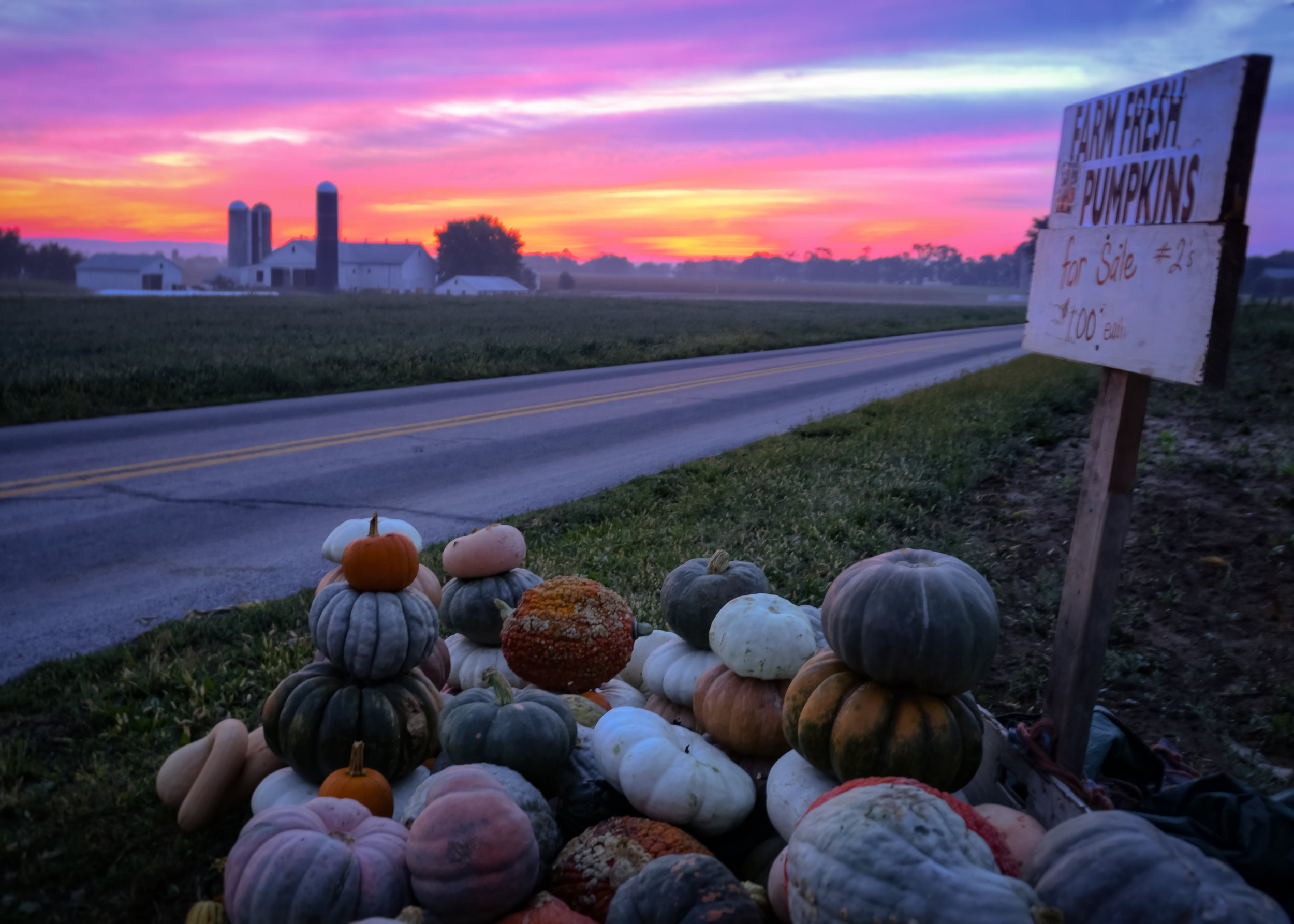 Farm fresh pumpkns at sunrise along Amsterdam road near New Holland.