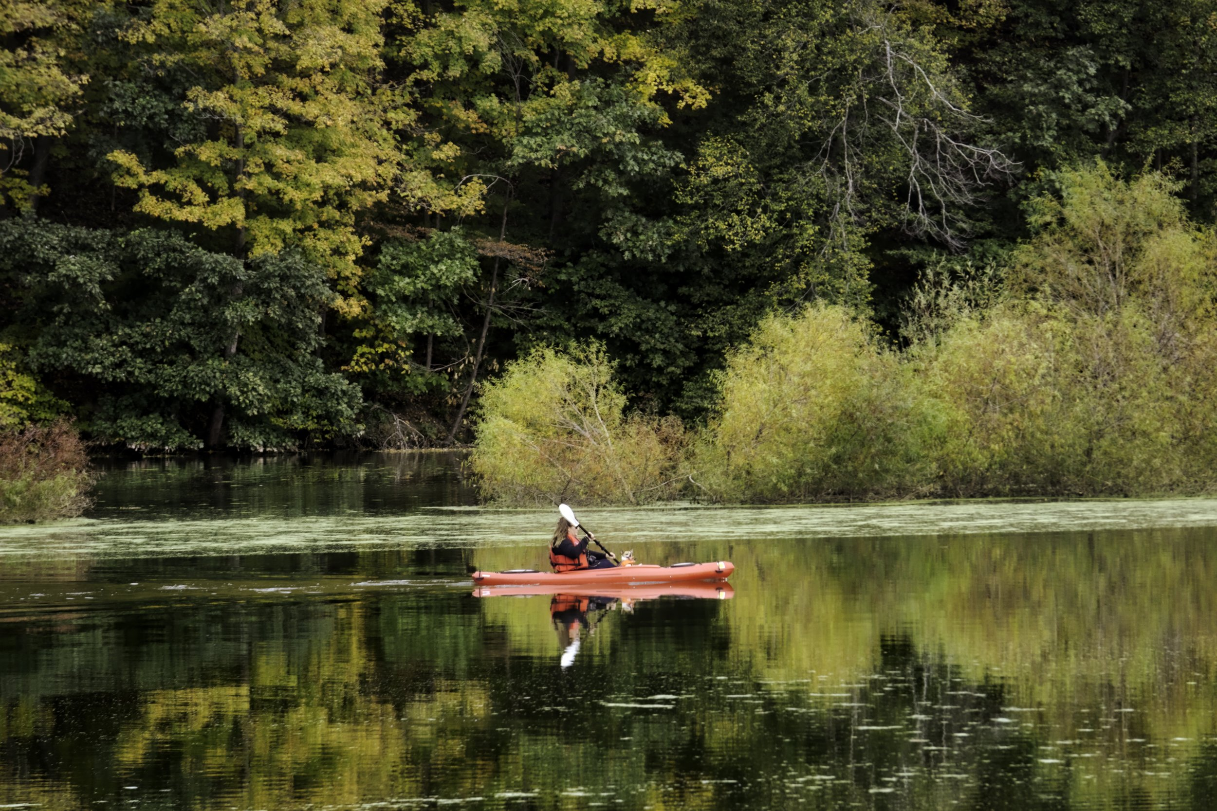 A kayaker with a furry friend taking in the view of the foliage at Speedwell Forge Lake.