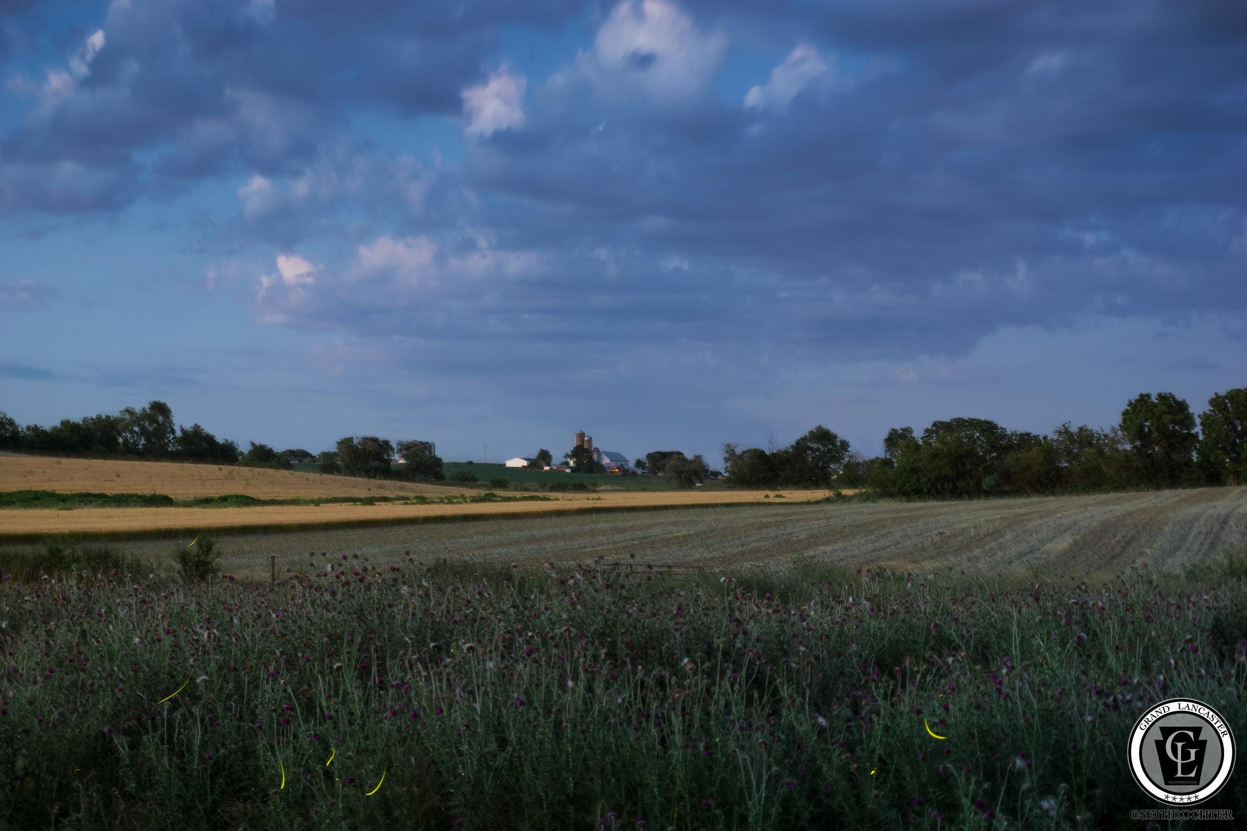 1274 - Lightning Bugs - Dusk Landscape