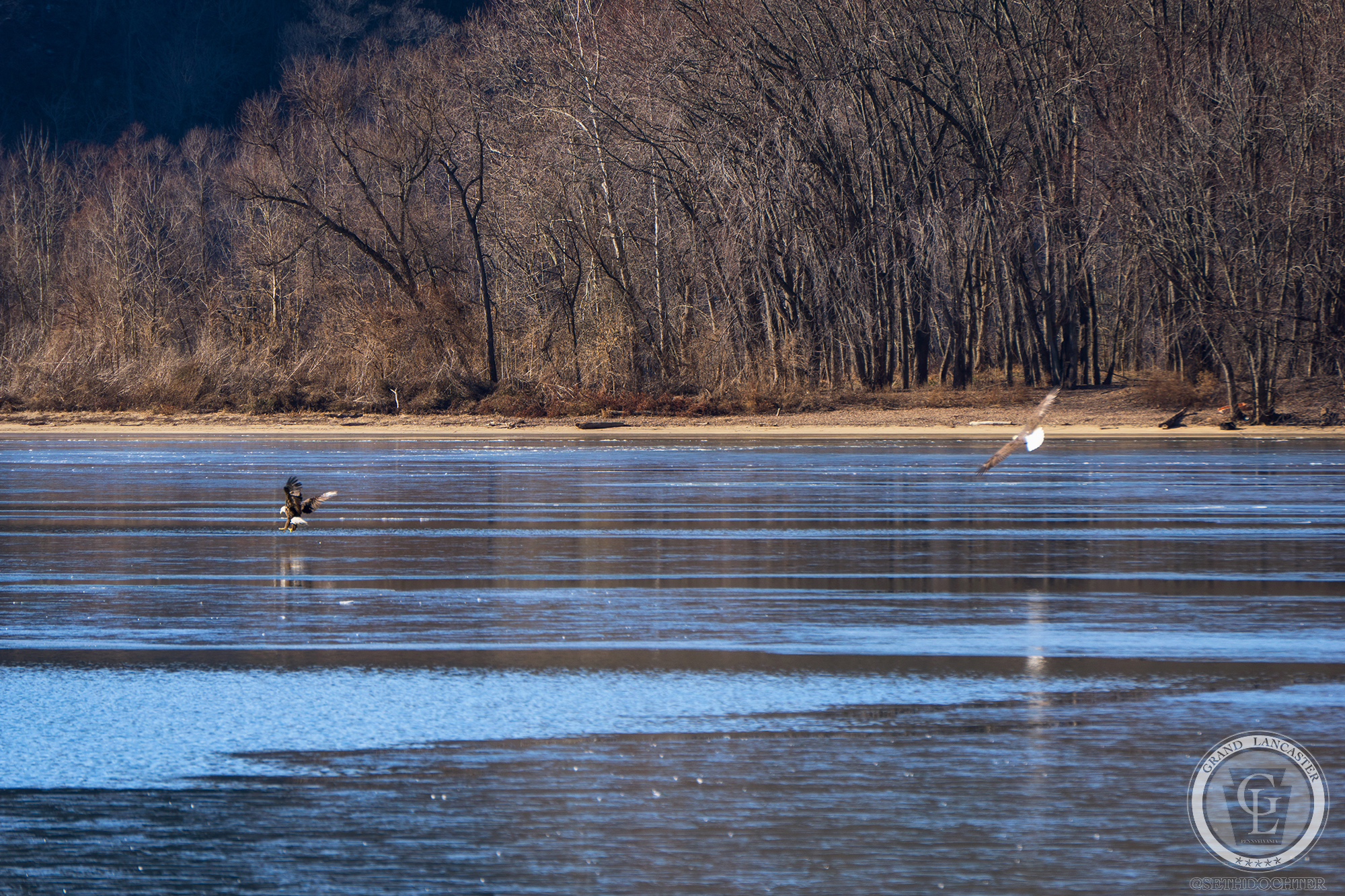 While stopping by the Pequea Boat Launch to capture the frozen Susquehanna River I could hear Eagles ... somewhere. After some time these two emerged with a younger third behind them. The two were quite playful chasing each other around the ice.