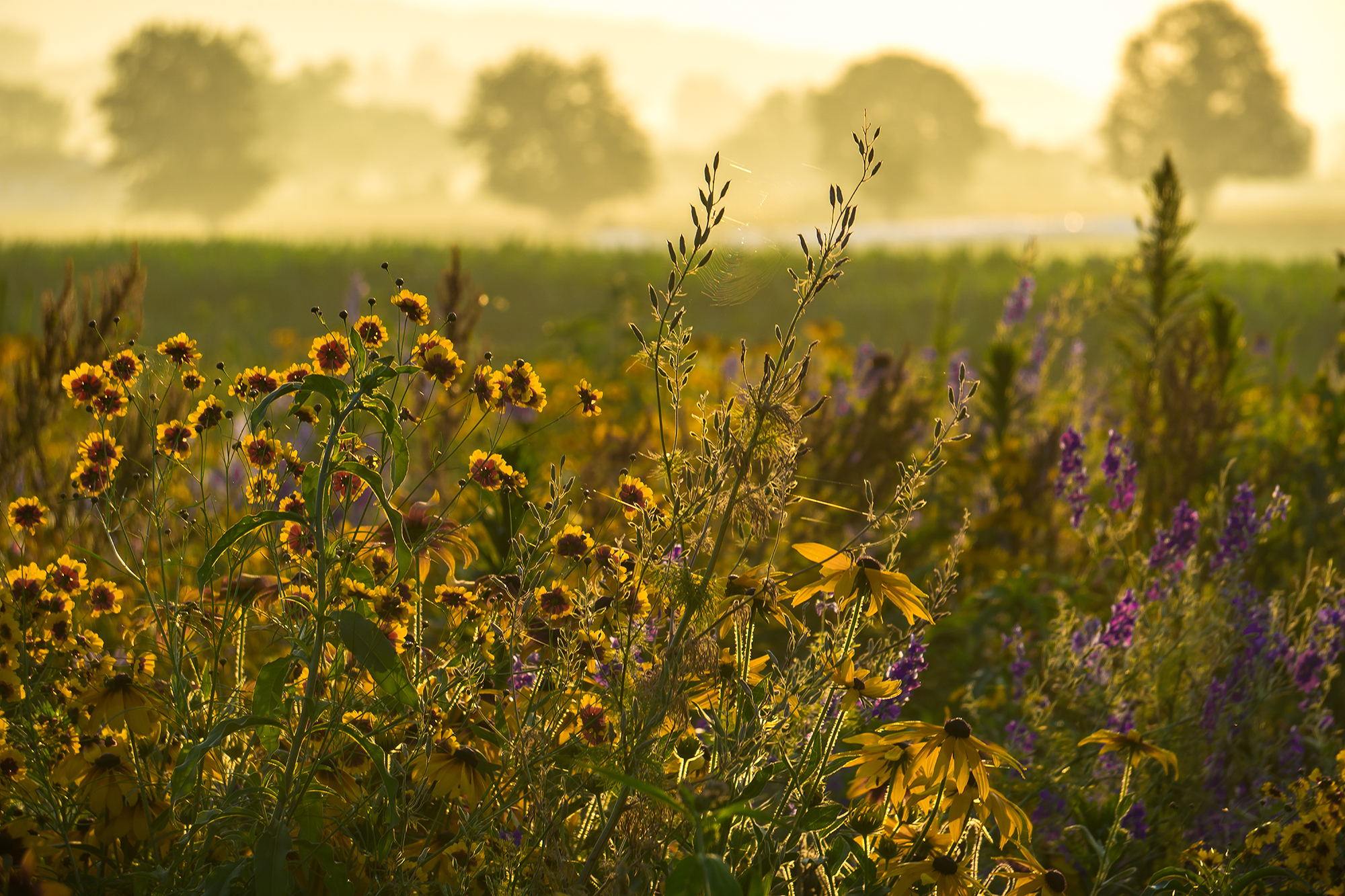 A Field of Beauty & Purpose - Feature Article - The Lititz Wildflower Patch