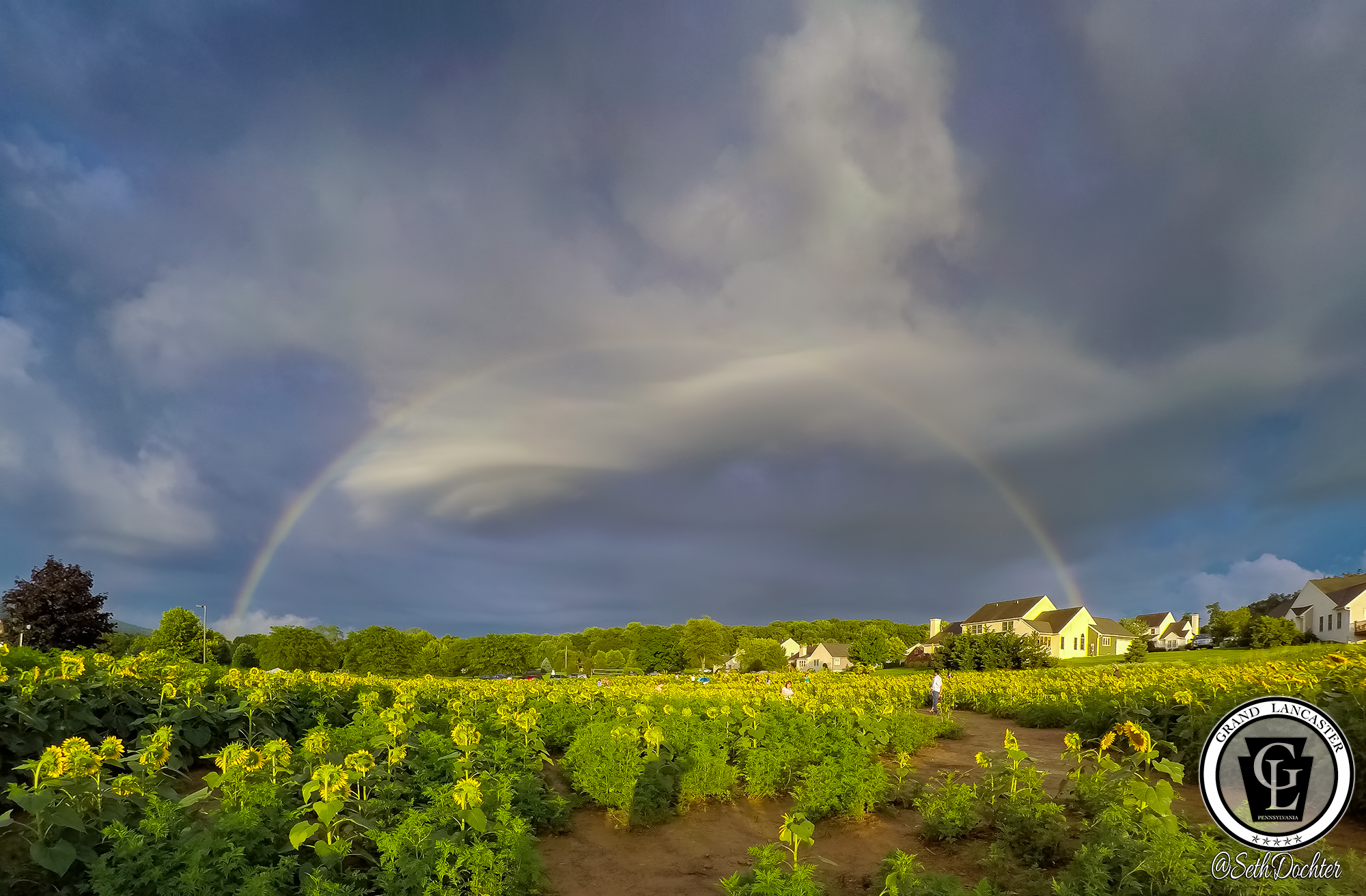 1503 - sunflowers 2018 - full rainbow (p,b).jpg