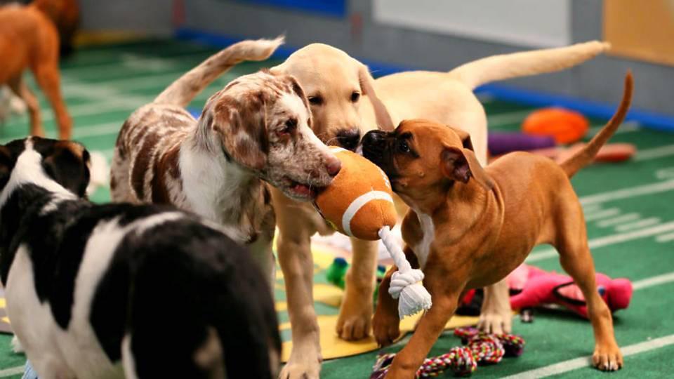 puppy-bowl-animalplanet.png