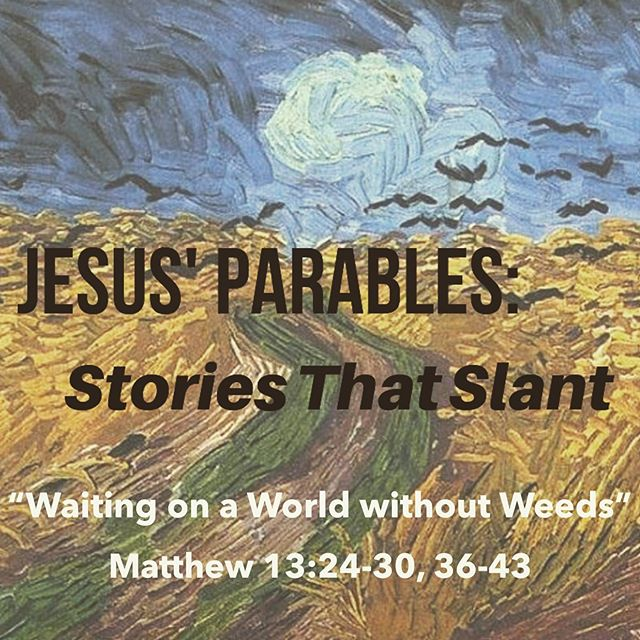 """Wheat and weeds. """"Let both grow together until the harvest ... """" Listen to Sunday's sermon! www.northcrosschurch.com/sermon-series.  #northcross"""