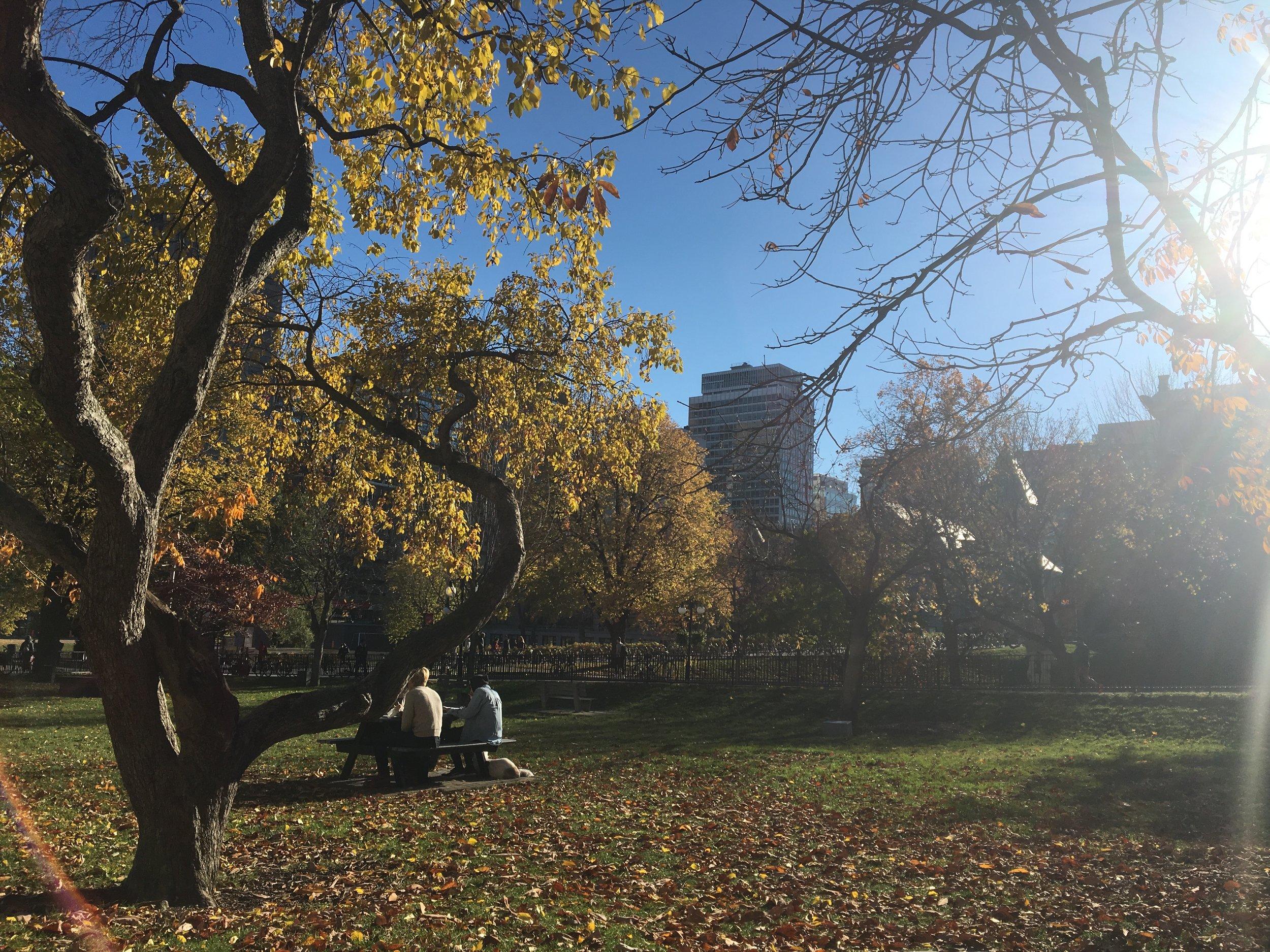 McGill University campus Photo Credit : Gabriella Hachem