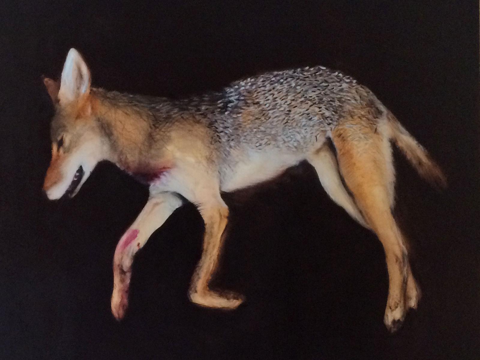 Coyote (I love America)