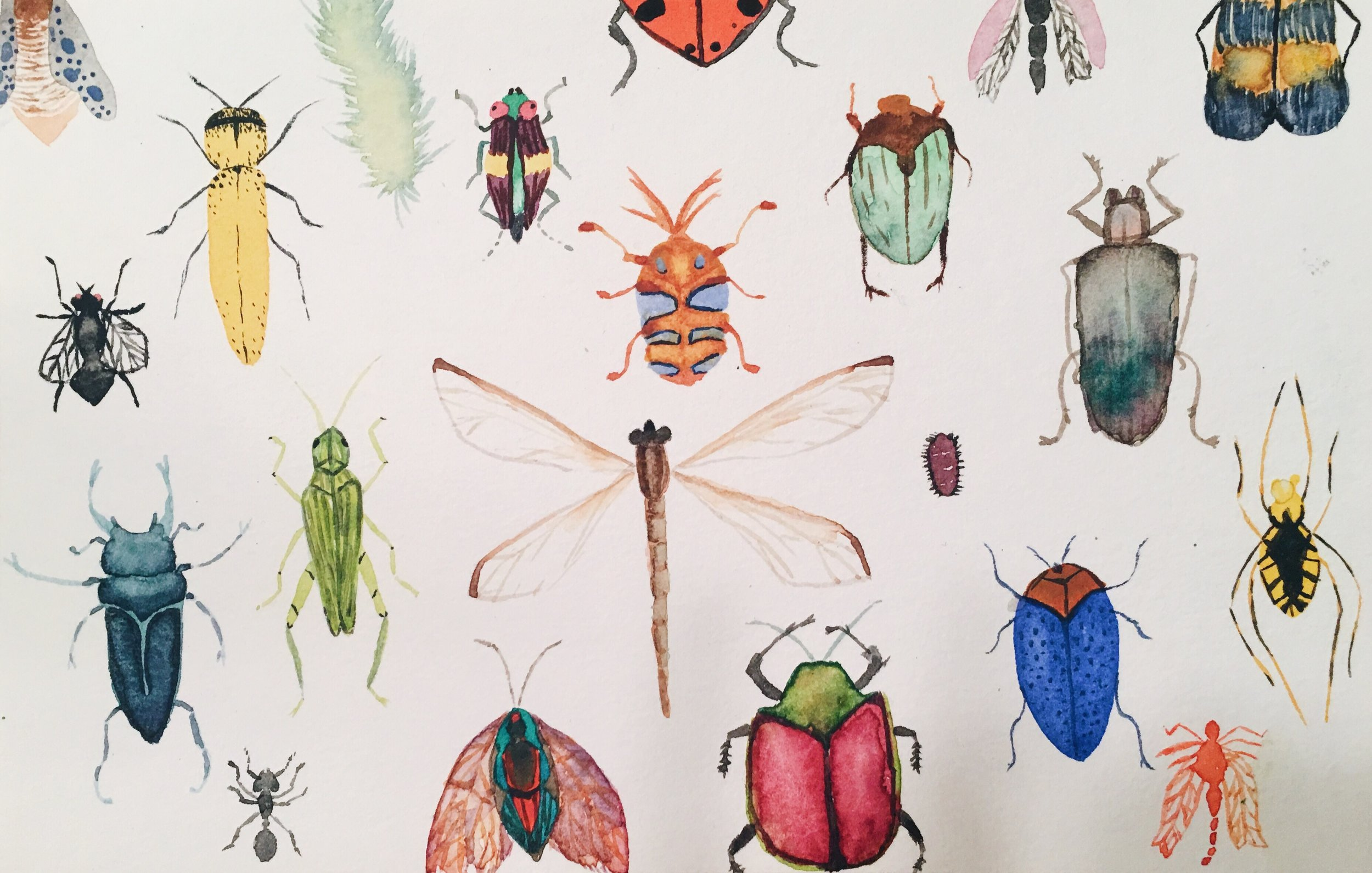 Insect Wallpaper  watercolor