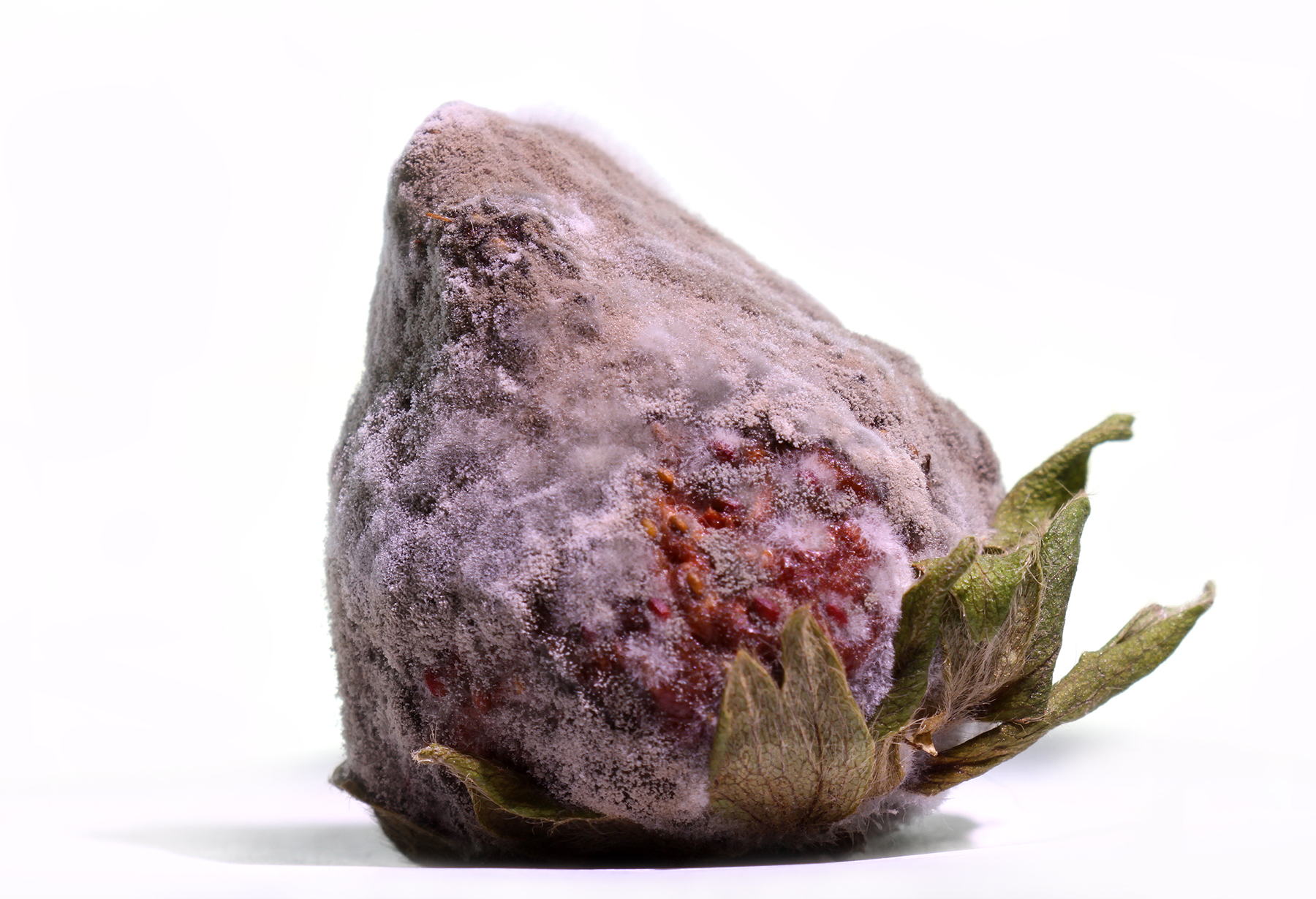 very mold strawberry.jpg