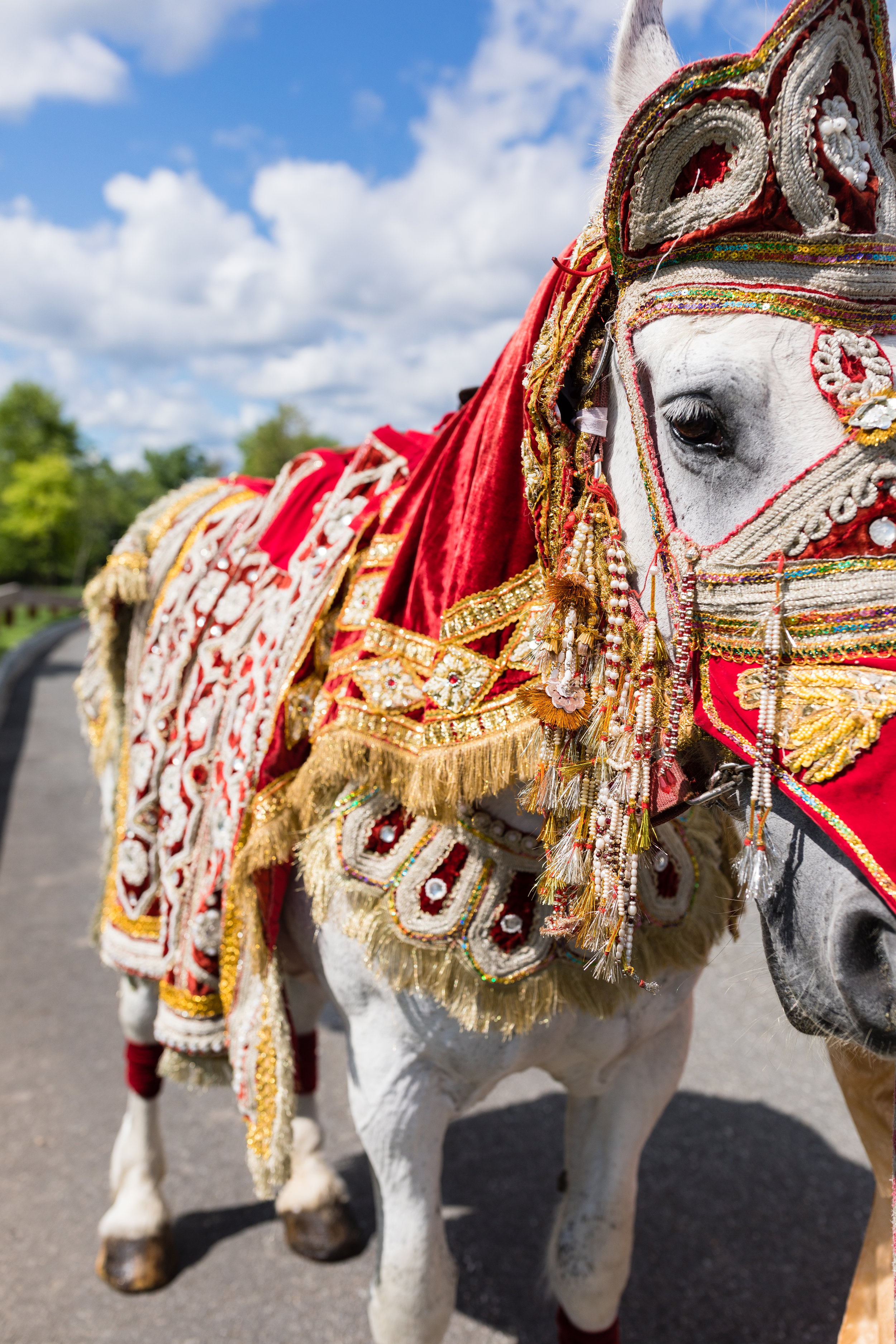 INDIAN WEDDING HORSE.jpg