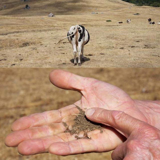 """Regenerative soil which stores CO2 and grows healthy food, requires a little rain and a lotta poop!⠀ ⠀ From """"WE""""VE GOT THE WHOLE WORLD IN OUR HANDS: California Agriculture and Climate Change"""" with writer Mark Schapiro. The book is linked from the bio page.⠀ ⠀ #agriculture #poop #manure #soil #cows #farming #regenerativeagriculture #climatechange @markschapiro #hands #marin #marincounty #californiaagruculture #california #invokingthepause ⠀ #petercunninghamphotography #petercunningham #storytellingphotography"""