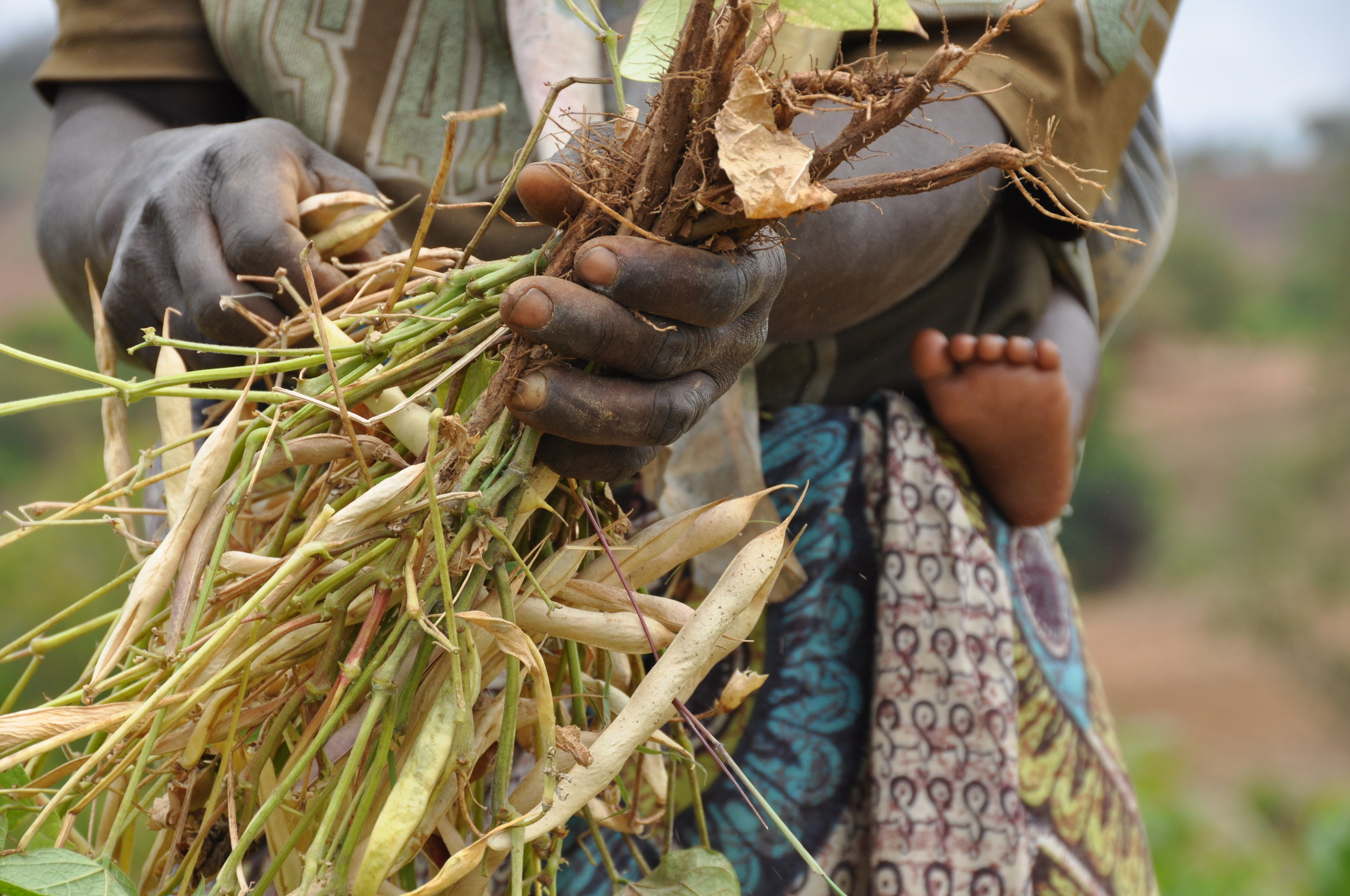 Woman farmer with peas, food, livelihoods, agriculture, with baby foot (1).JPG