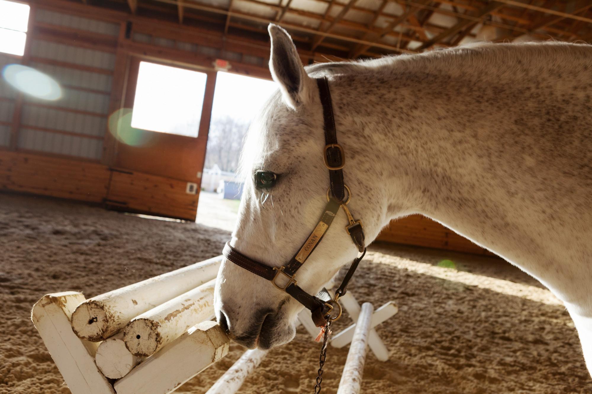 CareyKirkella-111119_Annabel_Horses_1073.jpg