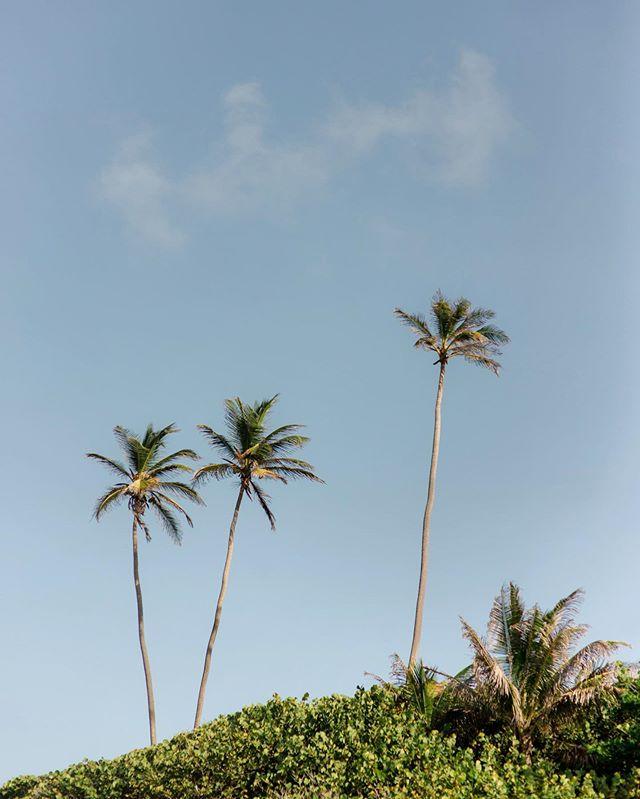 feeling the weekend  #islandinspired #islandlife #palmtrees #eastcoastbarbados