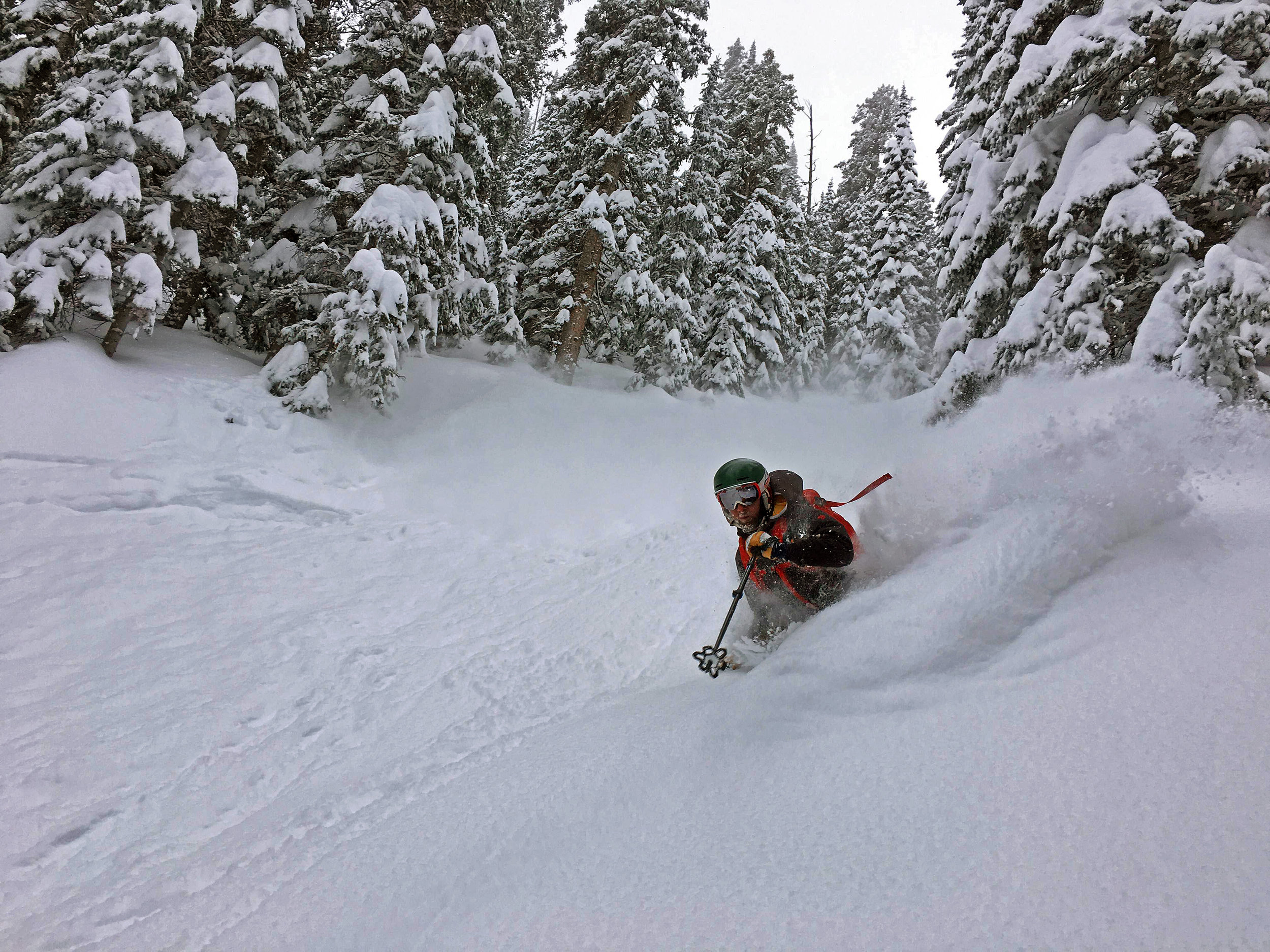 Deep powder on Parrot Peak.